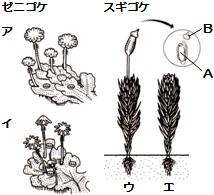 種子を作らない植物(コケ植物)